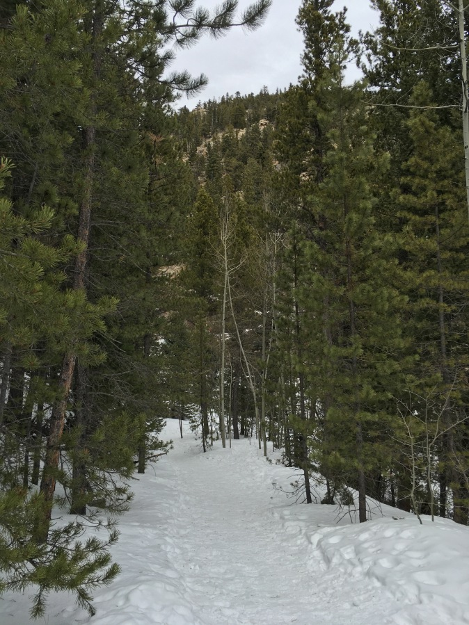 Gone Snowshoeing…